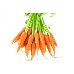 Морковь, Украина